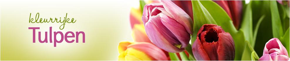 Tulpen bestellen bij - Kleur gemengde kamer ...