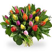Bos Kleurrijke Tulpen
