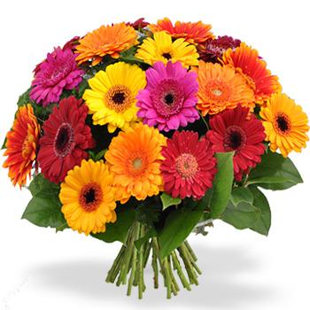 Bloemen gerbera