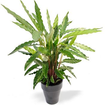 Afbeeldingen kamerplanten