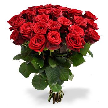 50 rode rozen