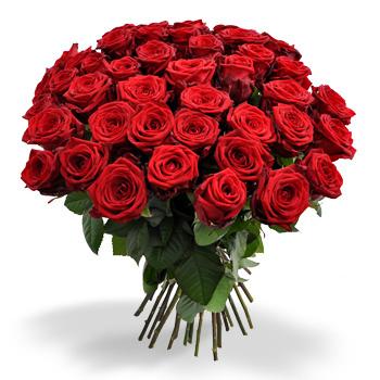 60 rode rozen